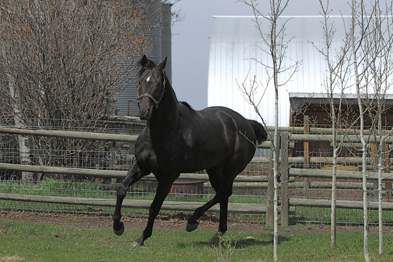 Mrs Tina Stone Thoroughbred Ownerview Thoroughbred