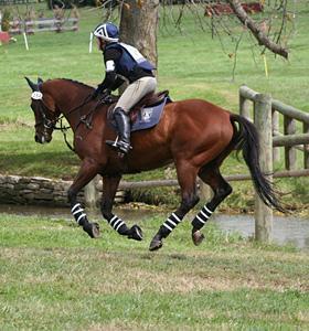 trott horse rescue